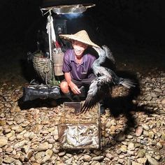 Cormorant #fishing in Guilin China. #contourairse #litemeravallt #pin #wanderlust #rundresa #semester #gruppresa #reseblogg #restips #kinaresa #resatillkina #kina #skarvfiske