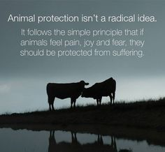 Compassion for all living things!