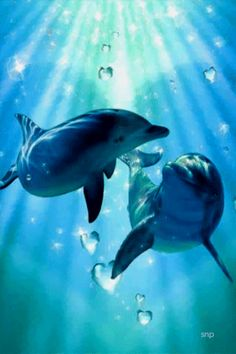 Dolphins - die Animation am Telefon Dolphin Images, Dolphin Art, Funny Animals, Animals And Pets, Cute Animals, Fish Under The Sea, Beautiful Love Pictures, Baby Dolphins, Bottlenose Dolphin