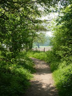 Forest and countryside Beautiful World, Beautiful Places, Country Life, Country Roads, Beau Site, Le Havre, Back Road, Peaceful Places, English Countryside