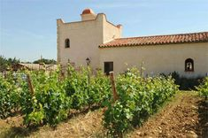 Organic Vineyard with Gite, Lifestyle/Business Opportunity in The Pyrenees-Orientales, France! This would be the perfect opportunity for a new life in France, there is scope for further development to the property. The vineyard is close to the sea, Perpignan and the Spanish border. Underground Cellar, Luxury Property For Sale, French Chateau, Real Estate Companies, Luxury Villa, Swimming Pools, Vineyard, Organic, France