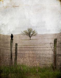 """Curtain Call"" by Jamie Heiden."