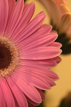 Gerbera Daisy II - close up Beautiful Landscape Wallpaper, Beautiful Flowers Wallpapers, Pretty Wallpapers, Flower Canvas, Flower Frame, Aesthetic Iphone Wallpaper, Aesthetic Wallpapers, Flower Wallpaper, Wallpaper Backgrounds