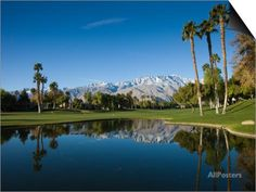 Pond in a Golf Course, Desert Princess Country Club, Palm Springs, Riverside County, California Posters at AllPosters.com