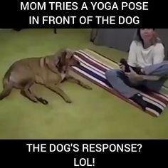 Learning from the dog Source by dog dog memes dog videos videos wallpaper dog memes dog quotes dogs dogs pictures dogs videos puppies puppy video Funny Dog Memes, Funny Animal Memes, Funny Animal Videos, Cute Funny Animals, Funny Animal Pictures, Cute Baby Animals, Funny Cute, Funny Dogs, Cute Dogs