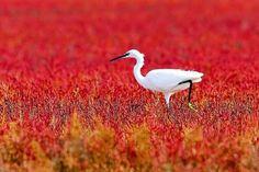 egret, by Tomaz Benedicic by Manueeltje