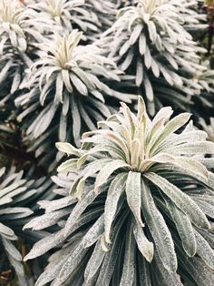 Not Copper Armour BLOG  Plant -- Leaf -- Botanical -- Images -- 2019
