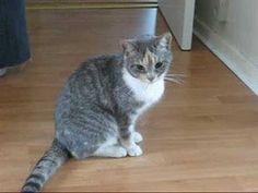 Este gato deve ter bebido   Veja mais em: http://www.jacaesta.com/este-gato-deve-ter-bebido/