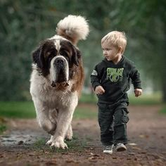 #littlekidsandtheirbigdogs #stbernard