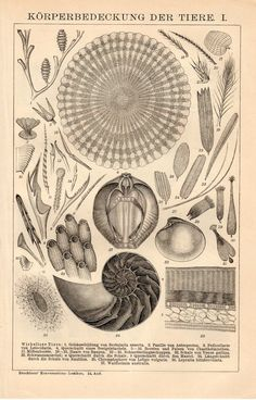 1894 Antique Zoological Print, Lithograph, Invertebrate Shells, Fish Scales, Reptile Skin, Bird Feathers, Vertebrate, Shields Illustration
