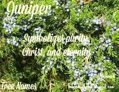 Beloved Baby Names: Tree Names Awesome Names, Cool Names, Nature Names, Juniper Tree, Faith In Love, Baby Names, Herbs, Plants, Story Inspiration