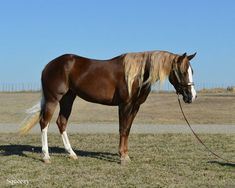 Engage Farms - Stallion - Footworks Hoss foals - Esqwhizit Hoss