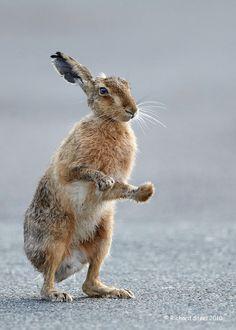 Wildlife Photographic Journals