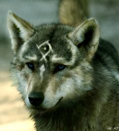 unique markings.<-----No, this is TP Link in wolf form, in real life