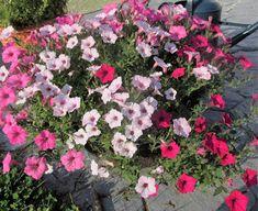Vickie's Kitchen and Garden: Gardening Tidbits