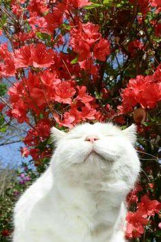 Cute Little Animals, Cute Funny Animals, Happy Animals, Wallpaper Gatos, Cat Wallpaper, I Love Cats, Crazy Cats, Cool Cats, Cat Aesthetic