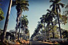 Calzada de Las Palmas, entrance to the city of Retalhuleu. Photo by Maynor Mijangos | Only the best of Guatemala