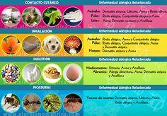 PURIFICACION DE AIRE AIRLIFE te dice. Qué sustancias pueden producir alergia? Los alérgenos más frecuentes son: pólenes, ácaros, epitelios de animales, látex (o caucho natural, que está presente en guantes de goma, sondas, catéteres, globos, en chupetes, tetinas de biberones, etc.), picaduras de avispas, ciertos alimentos y algunos medicamentos.
