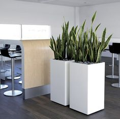 interior-plantscapes-and-sansevieria-plant