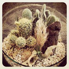 Introducing our Wasteland Terrarium series. #bones #cactus #grasses #plants #terrariums #ourspecialty #uniquegiftsalways #gastown #hipster #vancouver #instaplant