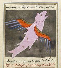 A Large, Winged Fish, from the Wonders of Creation (Aja'ib al-makhlugat) of Muhammad ibn Mahmud Tusi, Turkey, 16th c.