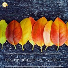 """#October brings a little crispiness in the mornings and evenings! This is also the month when """"Vata"""" #Dosha starts gaining ground in environment and within our bodies. . To avoid all #Vata related ailments during Fall and Winter seasons stress upon taking only warm meals and foods that would nourish and moisten the body against dryness! . Stews soups khichadi porridge #nuts milk & healthy fats such as #Ghee and #Olive Oil would be extremely helpful to consume during this changing season…"""