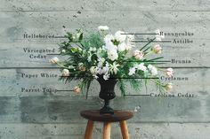 Floral Encyclopedia: Holiday Edition