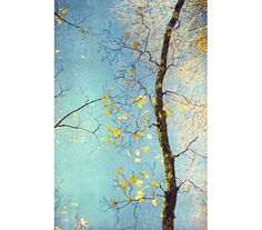 Nature Photography, Abstract Photograph, Asian Decor,  Autumn Foliage Gold Leaves  Turquoise, Gold Decor,  Fall  Decor. $25.00, via Etsy.