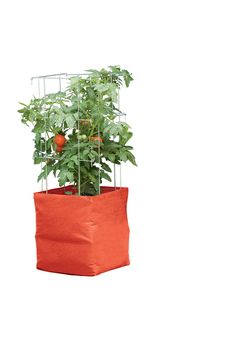 Growing Tomatoes In Pots Buy a Tomato Grow Bag Kit from Gardener's Supply. Save When You Buy the Tomato Grow Bag and Tomato Cage Kit in the Tomato Grow Bag Kit. Vegetable Planters, Planting Vegetables, Outdoor Planters, Planting Seeds, Garden Planters, Growing Vegetables, Garden Boxes, Vegetable Gardening, Veggies