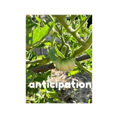Edit Post ‹ Agrarian Angel — WordPress