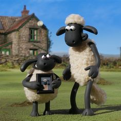 Timmy and Shaun! Shaun The Sheep, International Day, Good Buddy, You Really, Looking Up, Aesthetic Wallpapers, Friendship, Childhood, Profile Pics