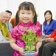 10 bellas imágenes de arreglos de bambú de la buena suerte   LoveToKnow Feng Shui, Bamboo, Gardens, Money, Lucky Bamboo, Bamboo Plants, Meaning Of Colors, Plant Stem, Beautiful Pictures