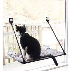 Wind & Weather Window Sill Cat Bed with EZ Window Mount™ Cat Window, Window Sill, Cute Kittens, Cats And Kittens, Ragdoll Cats, Kitty Cats, Burmilla Cat, Korat Cat, Heated Cat Bed