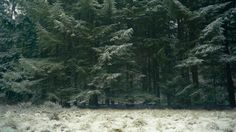 cinemagraph gif nature cinemagraph winter ice forest cold trees snowing living stills