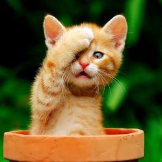 Oh no, how embarrasing...! #kitten
