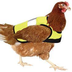 Safety first - auch für Pute, Huhn und Broiler: Die optisch ansprechende wie praktische Hühner Warnweste