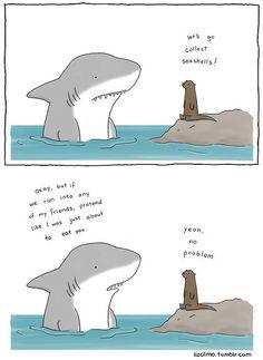 shark and seal illustration