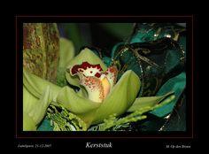 Een prachtige Orchidee verwerkt in een kerststuk. En ja...........gekocht bij De Orchideeën Hoeve in Luttelgeest in 2007.