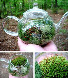 indoor fairy garden containers | Una teiera di vetro si trasforma in un terrario di muschio che è ...