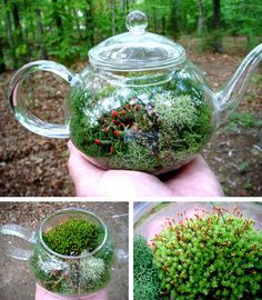 A glass teapot transforms into a unique moss terrarium that would feel right at home in the kitchen.