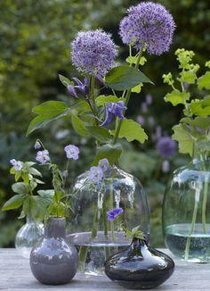 Allium op vaas, fotografie: Tine Edinger
