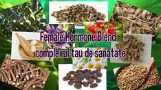 Female Hormone Blend vine in ajutorul femeilor Female Hormones, Mai, Vines, Plant, Grape Vines, Vitis Vinifera