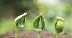 Die Begriffe Kaltkeimer oder Frostkeimer klingen zunächst paradox – schließlich ist es ja die Wärme, die das Wachstum der Pflanzen anregt.