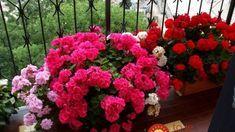 Organic Gardening For Dummies Refferal: 7203094553 Front Gardens, Community Gardening, Organic Vegetable Garden, Plants, Garden, Garden Junk, Beautiful Flowers, Flowers, Outdoor Plants