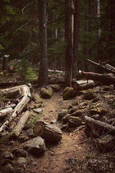 Forest Trail Art Print by Kevin Russ