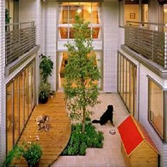 building a mini park in the middle of your house for the dogs? Awesome!
