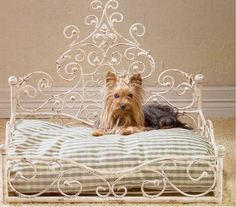 Over The Top Dog Bed...made for a Princess!