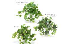 光触媒人工観葉植物 4121set「Simple Pot 【お買い得3種類セット】 イングリッスアイビー、グレープアイビー、ポトス 24cm(白プラ)」※