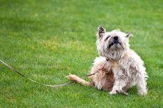 ***¿Cómo hacer un Antipulgas Casero?*** Llega el verano y tu mascota necesita una protección extra. Prepara estos antipulgas caseros, que además son naturales, económicos y seguros......SIGUE LEYENDO EN..... http://comohacerpara.com/hacer-un-antipulgas-casero_11971h.html