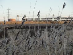 walthamstow marshes - Google Search
